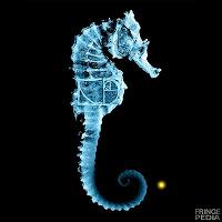 Seahorse 5 oclock